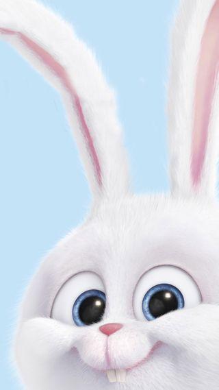 Обои на телефон кролики, фильмы, секрет, питомцы, милые, жизнь, the secret life of pets, snowball