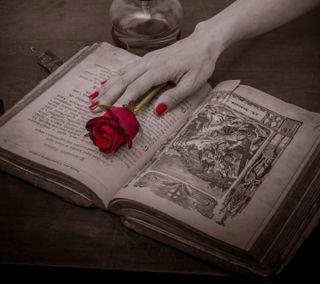 Обои на телефон книга, рука, розы