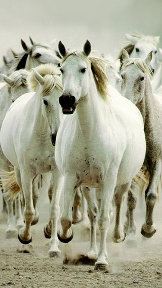 Обои на телефон лошади, я, дикие, далеко, wild horses, drag, couldnt