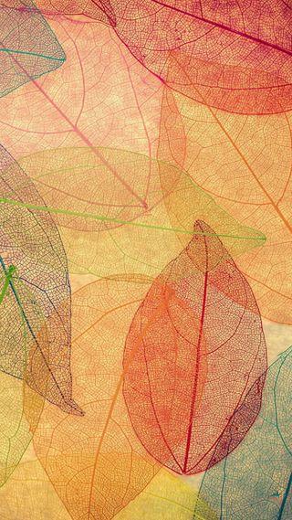 Обои на телефон узоры, шаблон, листья, красочные, leaves patterns