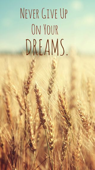 Обои на телефон мечты, цитата, пшеница, поле, никогда, мотивация, up, give