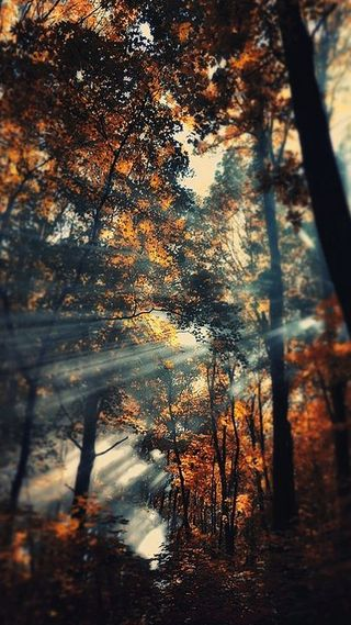 Обои на телефон солнце, лучи, луч, лес, дерево, sun rays