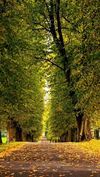 Обои на телефон природа, осень, дорога