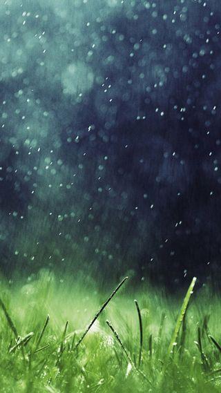 Обои на телефон мокрые, трава, зеленые, дождь