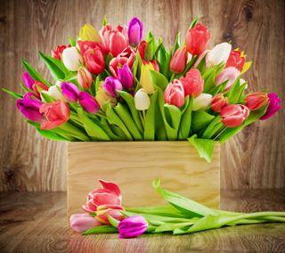 Обои на телефон тюльпаны, цветы, красочные, букет