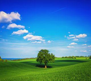 Обои на телефон поле, приятные, природа, пейзаж, облака, новый, небо, дерево