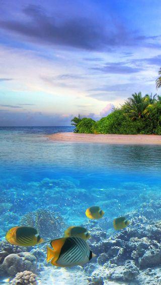 Обои на телефон свежий, рыба, подводные, океан, природа, пейзаж, вода, aquatic swimmers, 4k