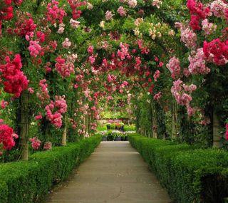 Обои на телефон туннель, сад, путь, цветы, flowers path