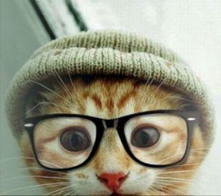 Обои на телефон хипстер, кошки, милые, котята, kitty cat