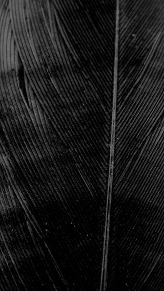 Обои на телефон перо, черные, темные, птицы, простые, монохромные, линии, ворона