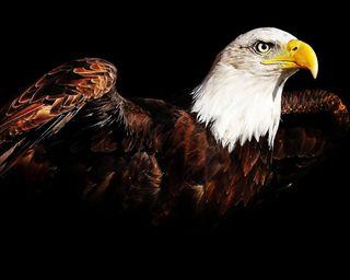Обои на телефон птицы, полет, орел, глаза
