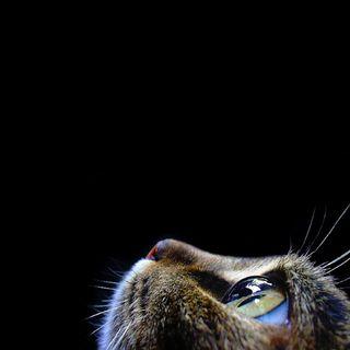 Обои на телефон айпад, кошки, hd