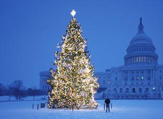 Обои на телефон случаи, рождество, праздник, дерево