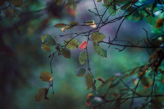 Обои на телефон макро, фантазия, природа, прекрасные, пейзаж, осень, красочные, зеленые, unum in multis, imagination