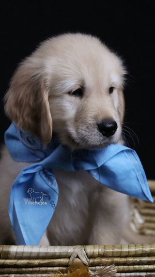 Обои на телефон щенки, собаки, приятные, прекрасные, милые