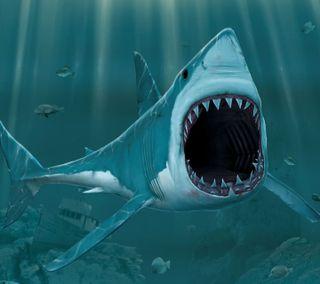 Обои на телефон атака, акула, shark attack