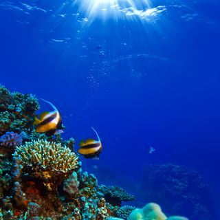 Обои на телефон подводные, рыба, океан, кораллы, undersea