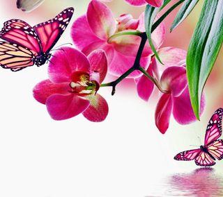 Обои на телефон боке, цветы, розовые, листья, вода, бабочки