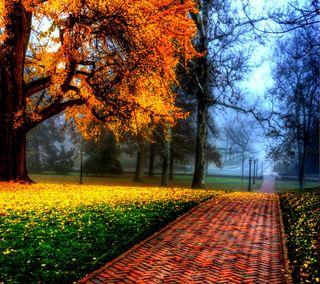 Обои на телефон парк, природа, прекрасные, облака, красочные, деревья, времена года, блестящий, brilliant park