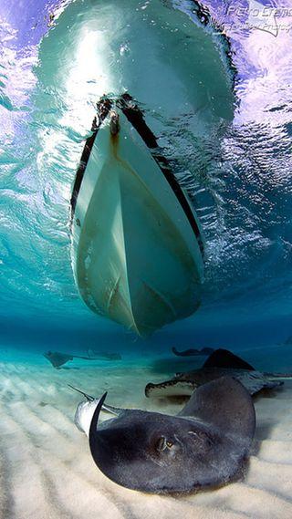 Обои на телефон рыба, лодки, boat and fish, and fish