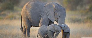 Обои на телефон слоны, слон, мама, лицо, животные, дикие, арт, elephants mother, art
