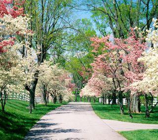 Обои на телефон сад, цветы, природа, прекрасные, пейзаж, парк, деревья, beautiful park