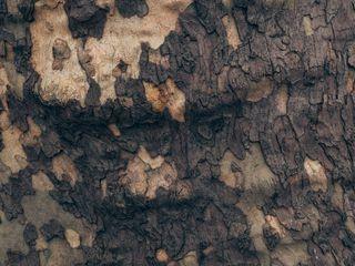 Обои на телефон камуфляж, природа, дерево, zedgecamo, camo tree