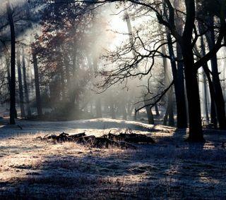 Обои на телефон тень, свет, лес, дерево