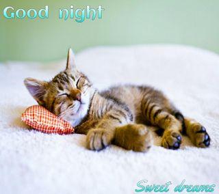 Обои на телефон ночь, кошки, good  night, good