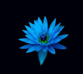 Обои на телефон лотус, цветы, синие, абстрактные, z1, xperia, blue lotus int s5