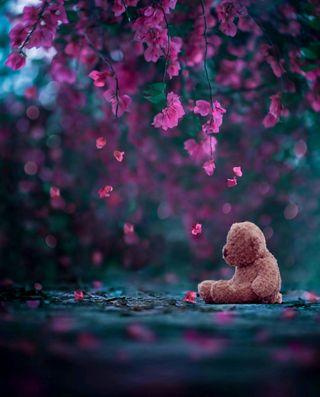 Обои на телефон вишня, цветы, цвести, тедди, природа, падение, одиночество, медведь