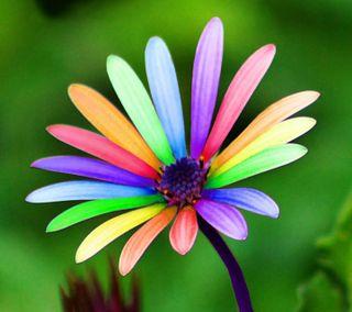 Обои на телефон маргаритка, цветы, цветочные, цветные, флора, приятные, природа, небо, деревья, дерево, color daisy