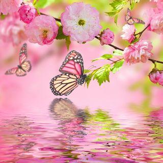 Обои на телефон art, арт, прекрасные, вода, бабочки, цветочные, цвести, вишня