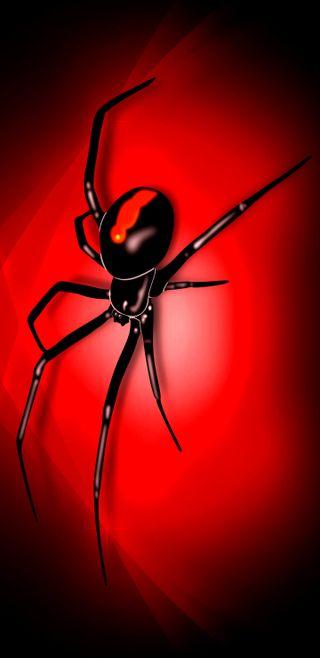 Обои на телефон яд, киллер, черные, паук, мертвый, красые, жуткие, веб, амолед, black widdow, black red dead, bite, amoled