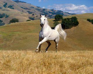 Обои на телефон страна, лошадь, прекрасные, поле, небо, классные, гордый, белые, white horse