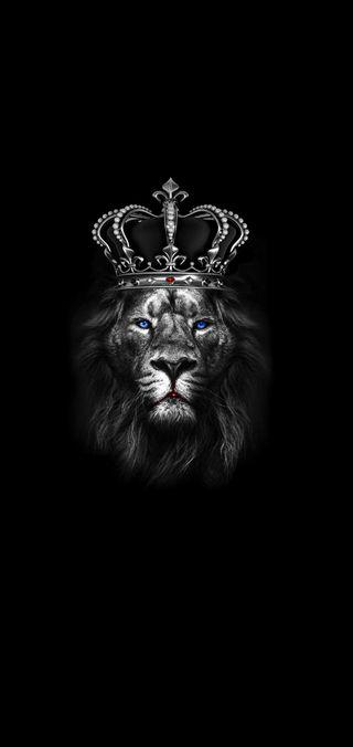Обои на телефон лев, черные, корона, король, животные, 2019