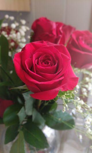 Обои на телефон валентинка, розы, любовь, красые, зеленые, love
