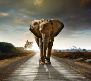 Обои на телефон ходячие, слон, мечта, закат, дорога
