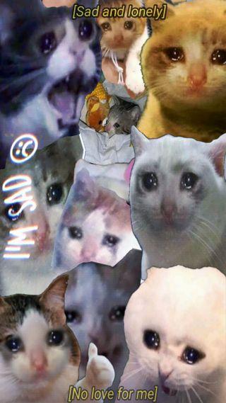 Обои на телефон маленький, кошки, коты, кот, грустные, бразилия, sad cat, gato triste, engracados, cry, choro, chorando