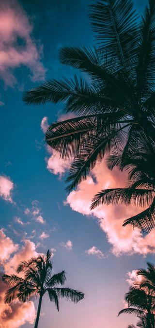 Обои на телефон пляж, пальмы
