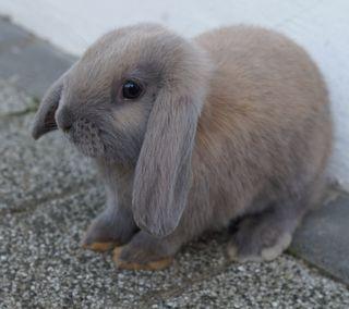 Обои на телефон кролики, питомцы, пасхальные, милые, кролик, животные
