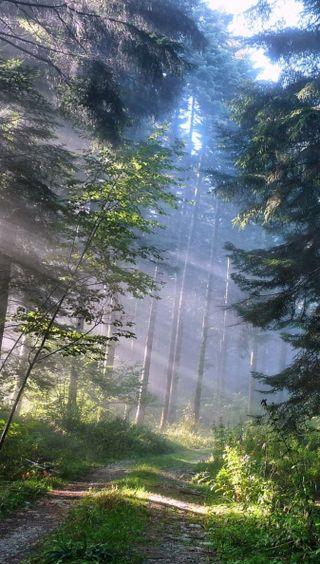 Обои на телефон путь, лес, зеленые