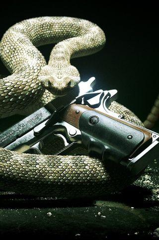 Обои на телефон змея, оружие, новый, snake gun