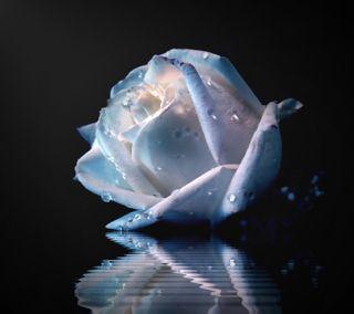 Обои на телефон мягкие, синие, розы, soft blue rose, soft blue