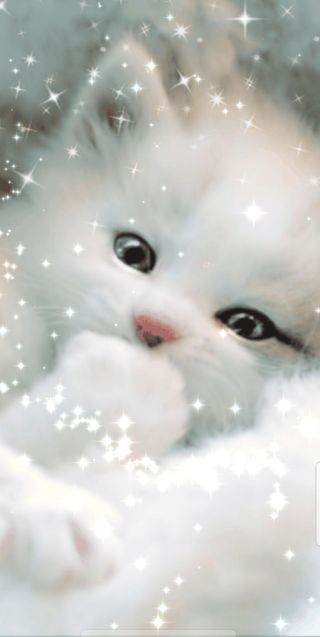 Обои на телефон снег, симпатичные, рождество, котята, белые