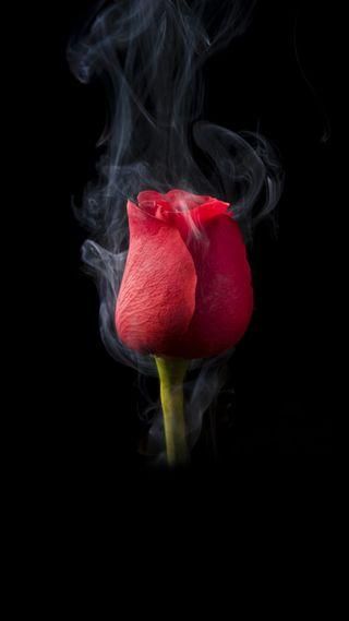 Обои на телефон х6, стандартные, дым, розы, boway u11