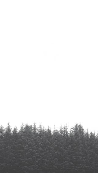 Обои на телефон серые, лес, деревья, дерево, белые, treetops