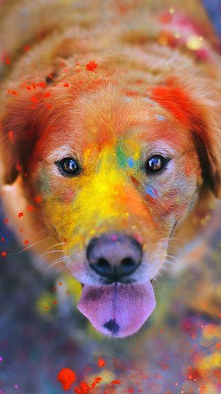 Обои на телефон друг, цветные, собаки, colourfu dog