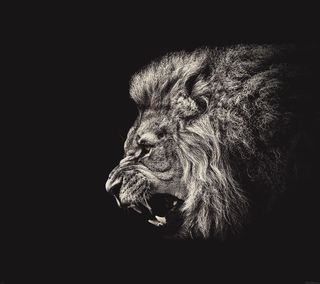 Обои на телефон рык, лев, арт, roar lion illust art, roar lion, illustart