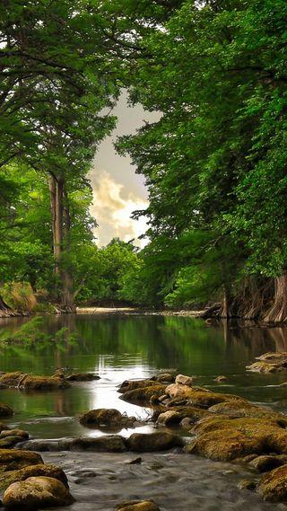 Обои на телефон пруд, лес, прекрасные